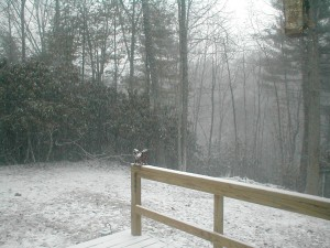 Big Snow09 3pm day1