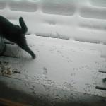 Big Snow09 day2 11am
